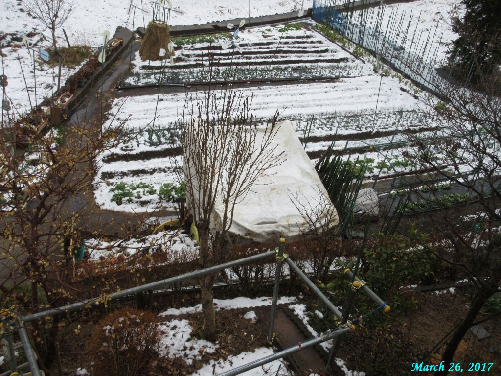 画像6(畑の雪)
