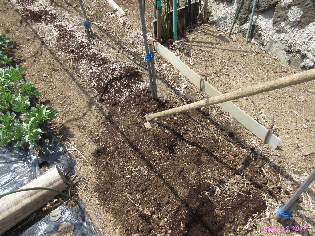 画像16(キュウリ用の畝作り・堆肥入れ)