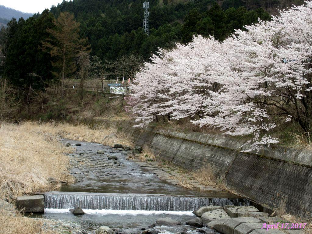 画像15(鹿留川・岩下橋)