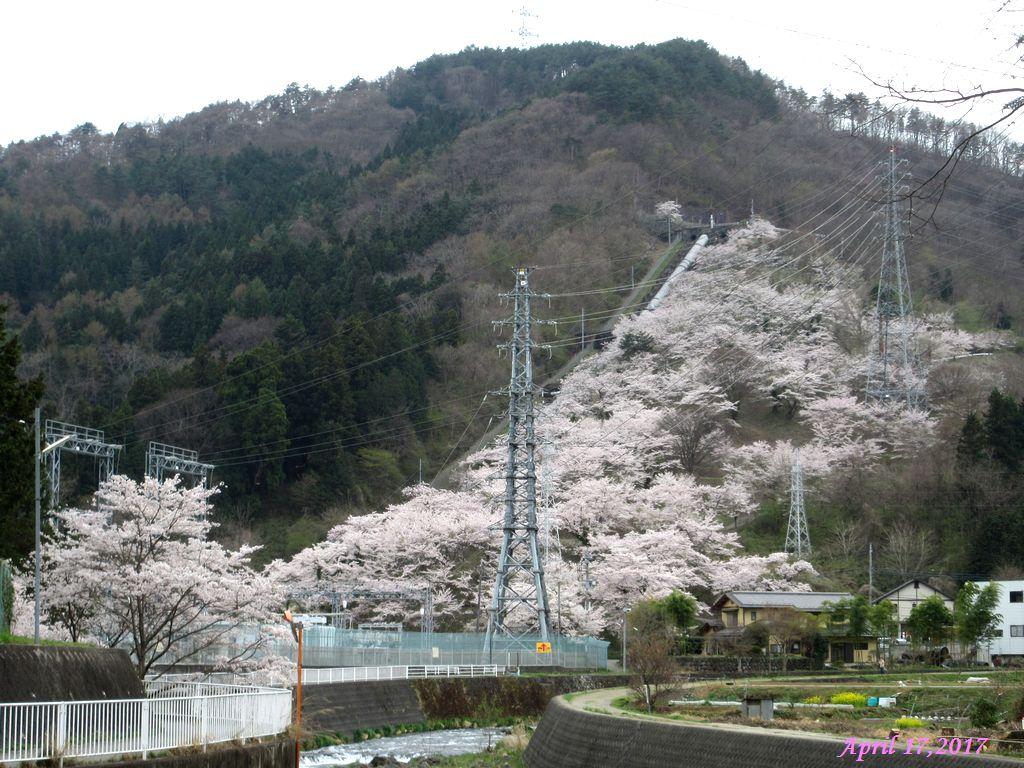 画像26(桂川宮下橋付近から見た鹿留発電所の水路)