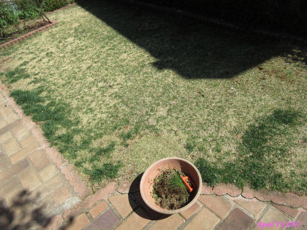 画像10(芝生の草取り)