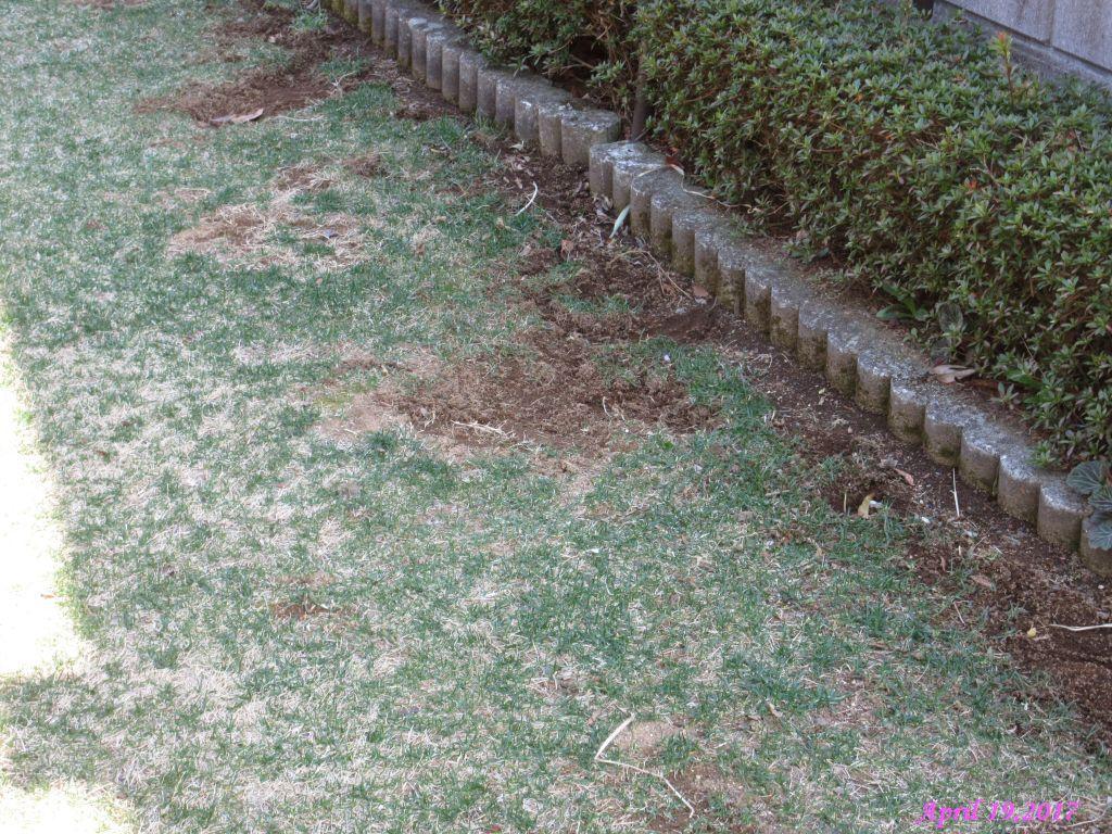 画像12(日陰の芝生)