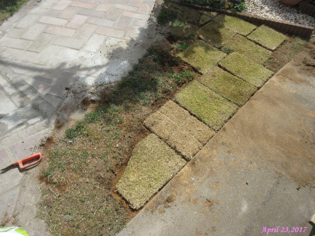 画像9(張った芝生)