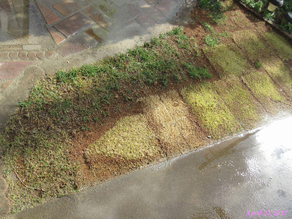 画像10(目土を入れた芝生)