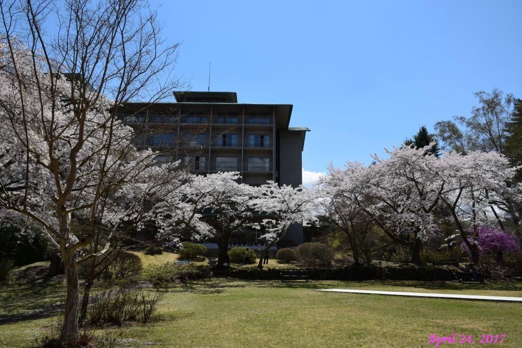 画像19(富士ビューホテルの桜)