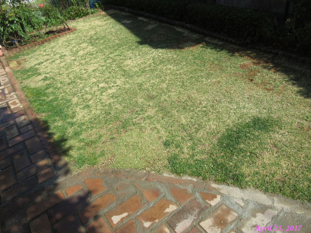 画像3(芝生に肥料と水まき)