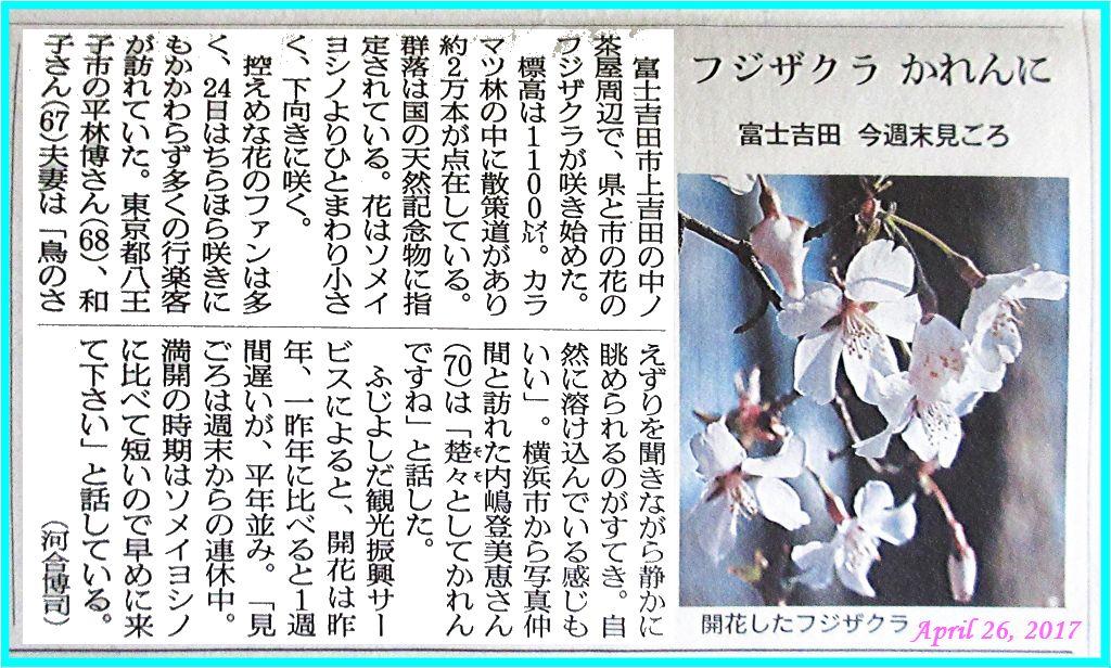 画像5(新聞記事)