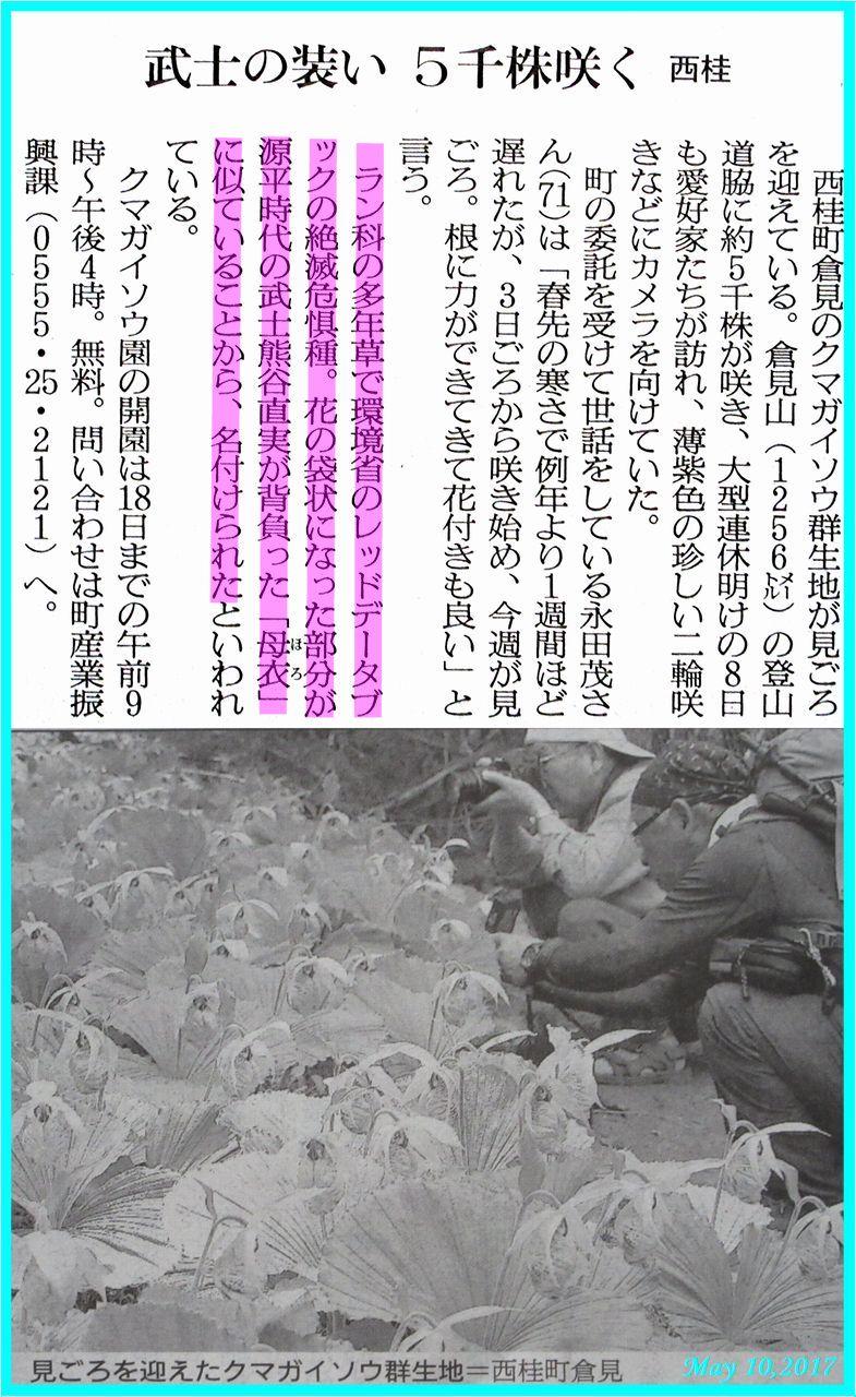 画像6(クマガイソウ群生地の新聞記事)