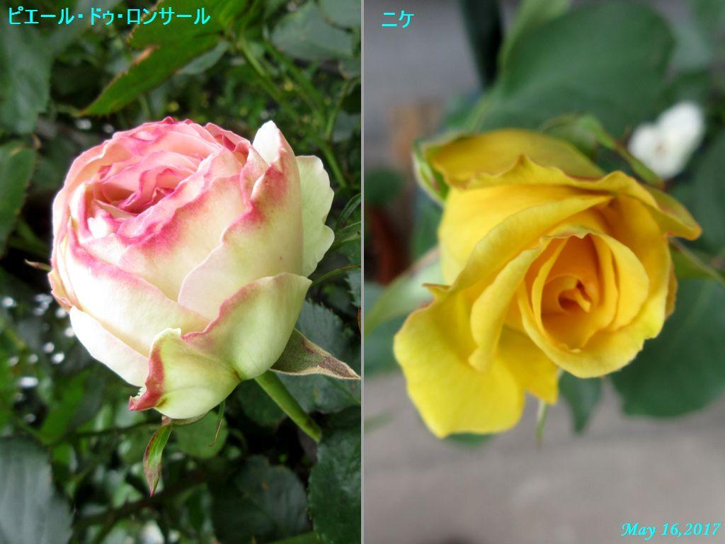 画像3(バラ)