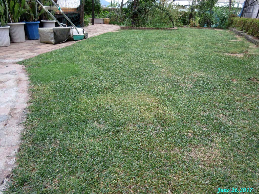 画像26(芝刈り後)