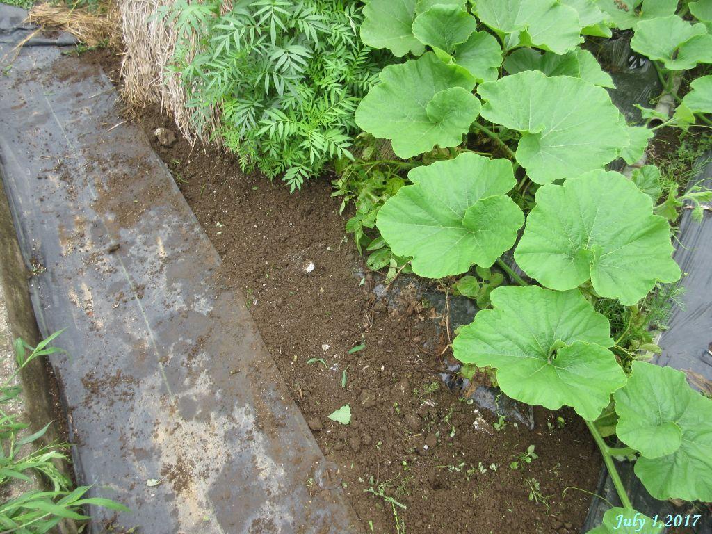 画像3(畑の草取り)