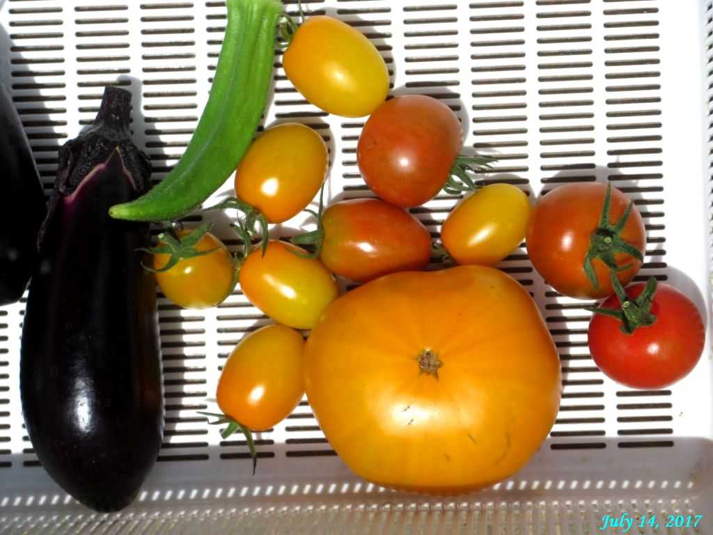 画像16(収穫野菜)