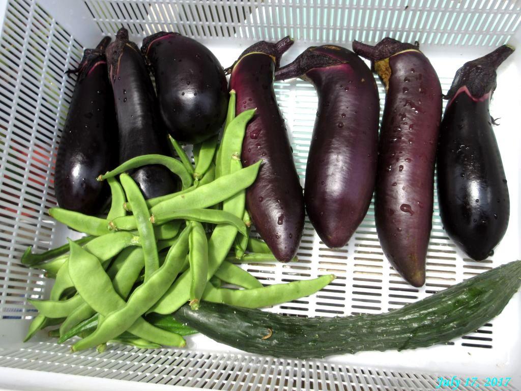 画像6(収穫した茄子、インゲン、キュウリ)