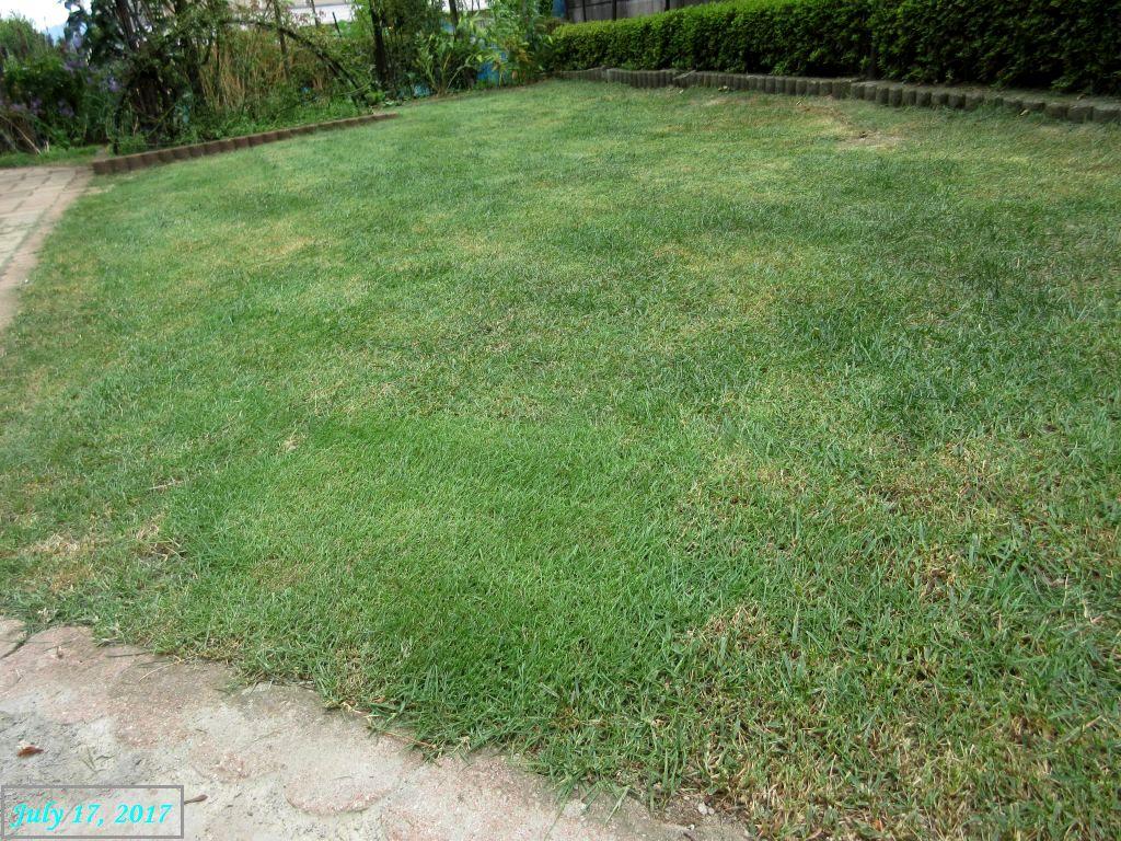 画像8(芝刈り)
