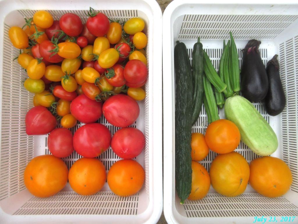 画像10(収穫したトマトなど)