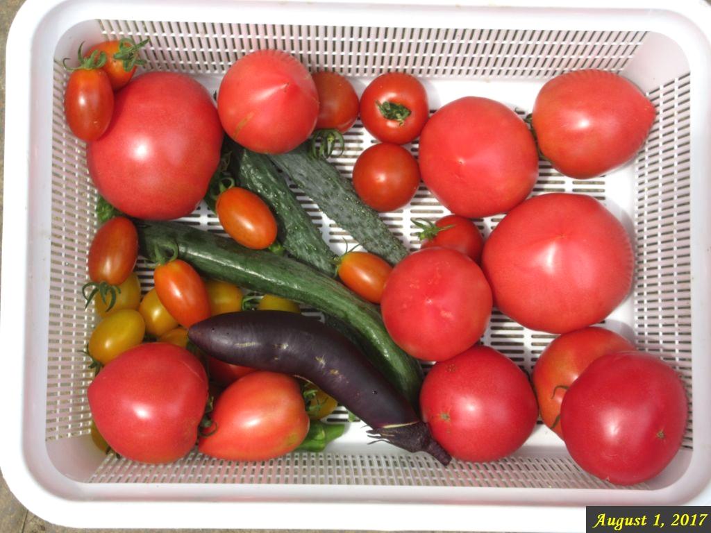 画像7(収穫した野菜)