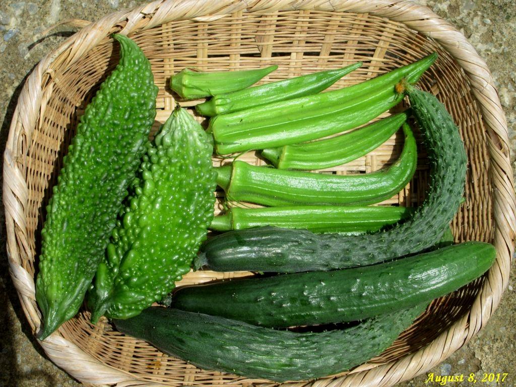画像13(収穫した野菜)