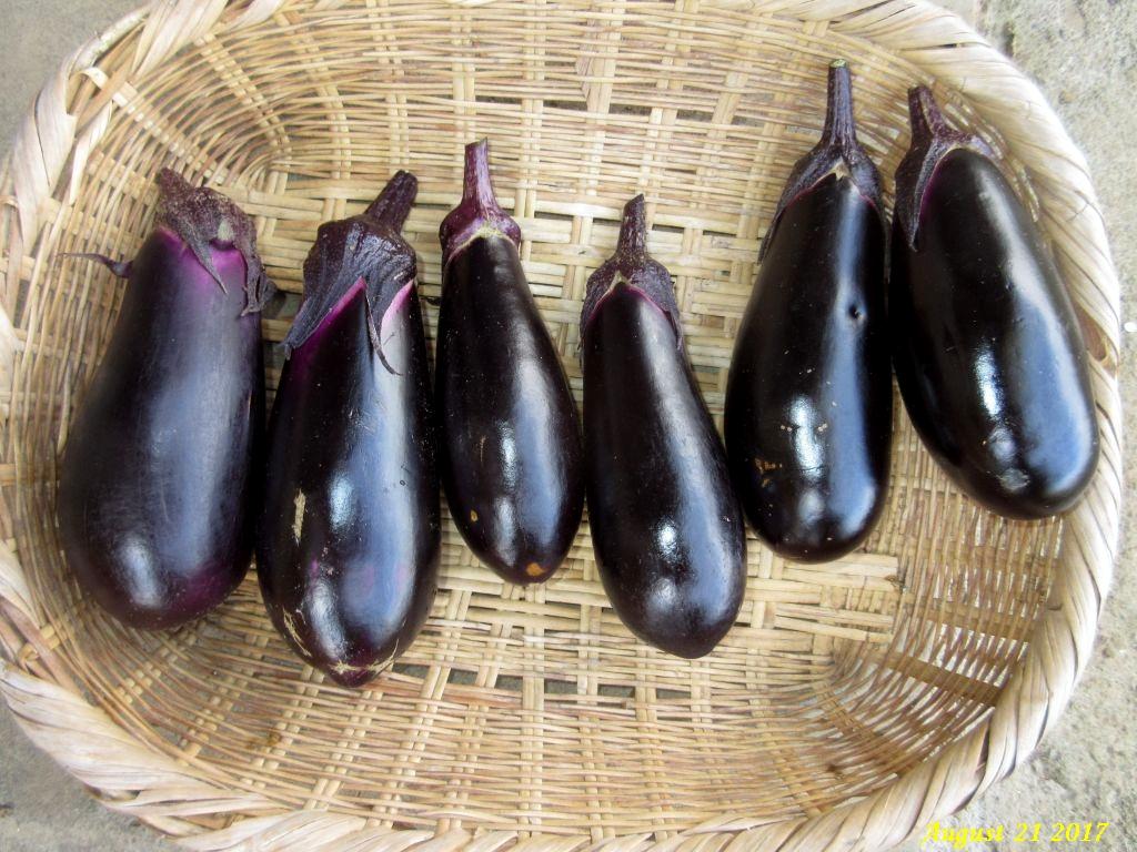 画像3(収穫した茄子)