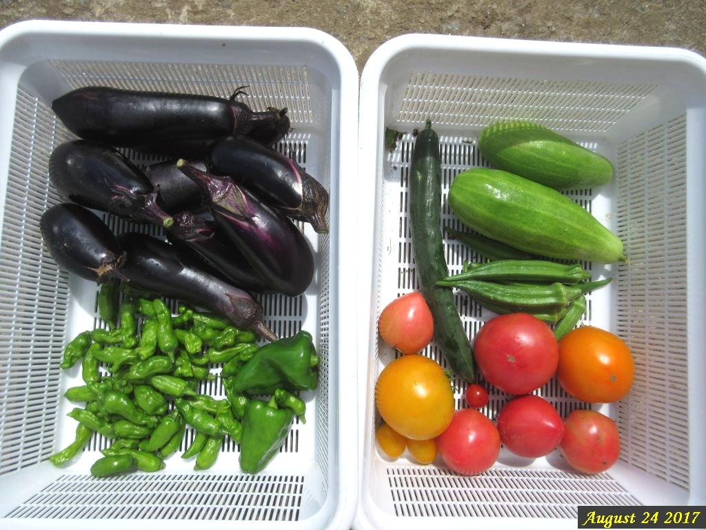 画像11(収穫した野菜)