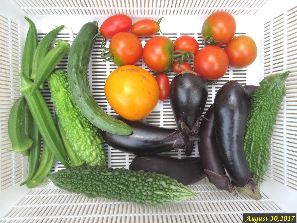 画像2(収穫した野菜)