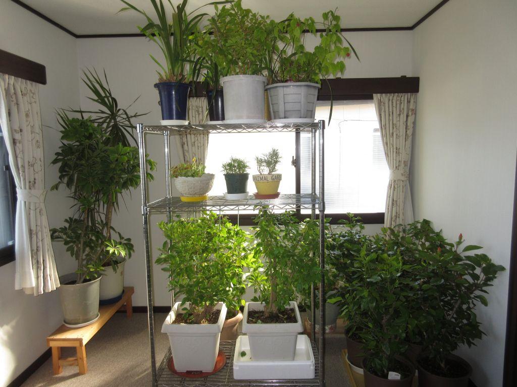 画像2(室内に入れた植木鉢)