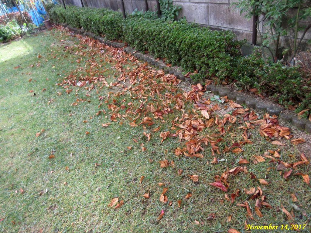 画像2(芝生の上の枯れ葉)