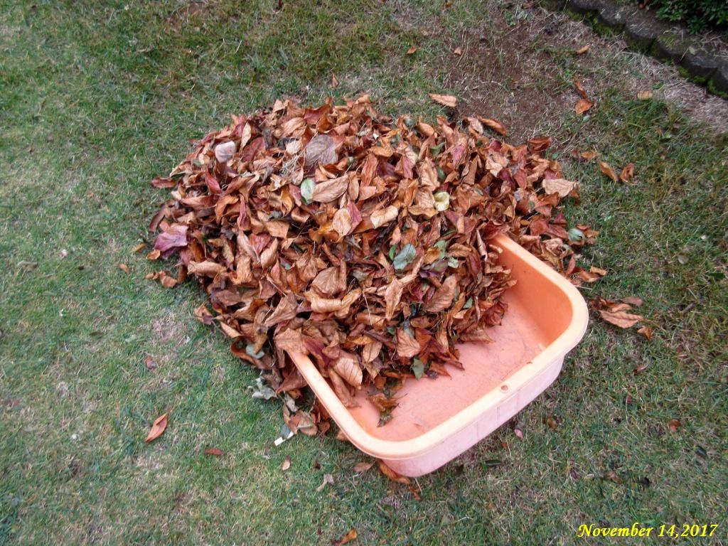 画像3(掃き集めた枯れ葉)