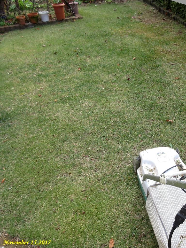 画像4(芝刈り)