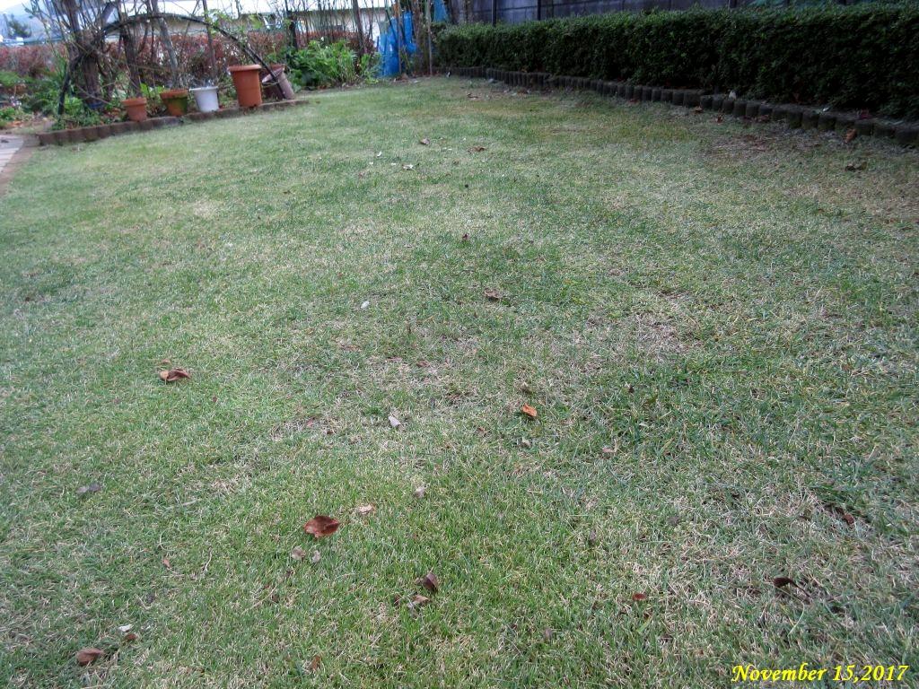 画像5(芝刈り後の芝生)