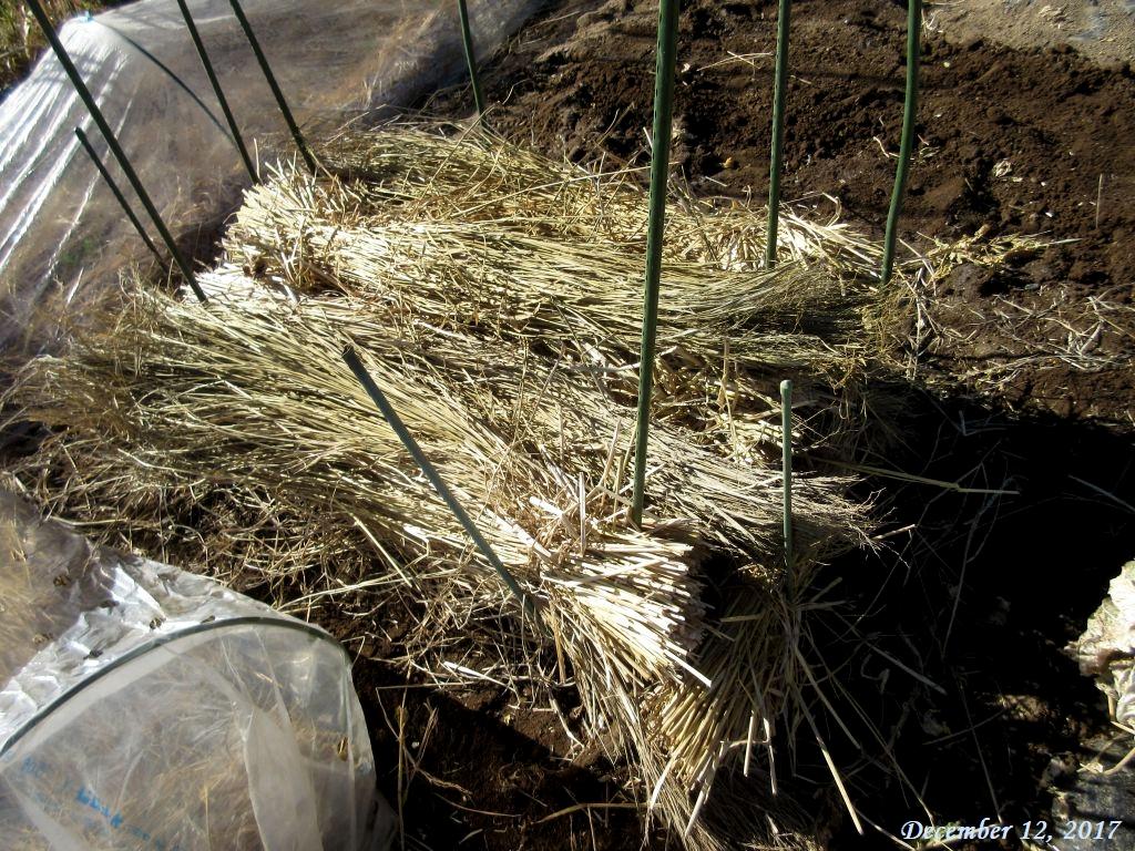 画像8(稲藁を掛ける)
