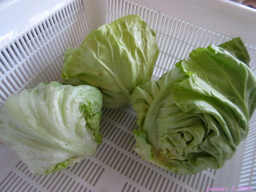 画像7(収穫したキャベツとレタス)