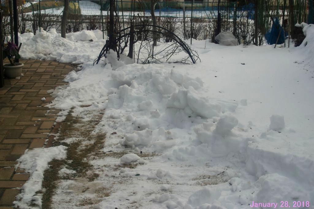 画像3(庭の残雪)