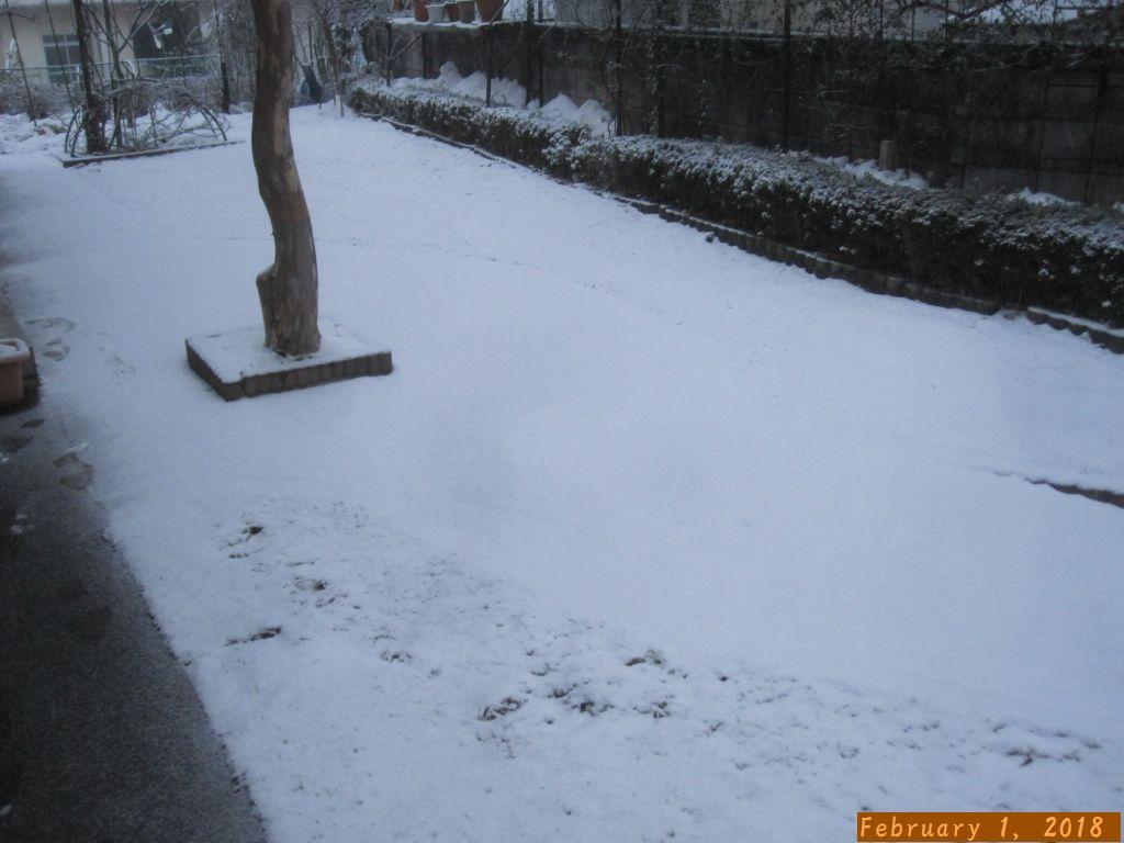 画像2(雪)