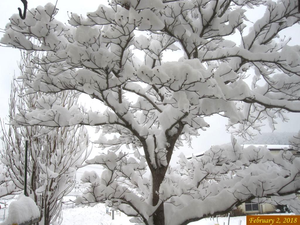 画像1(ハナミズキの雪)