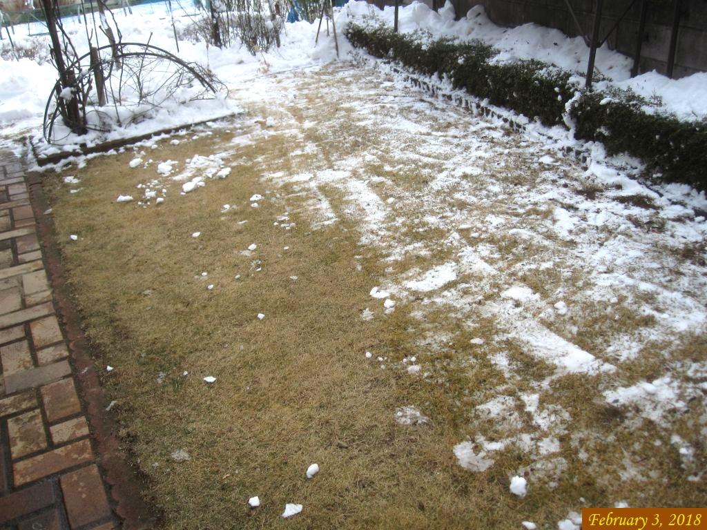 画像5(雪かきをした芝生)
