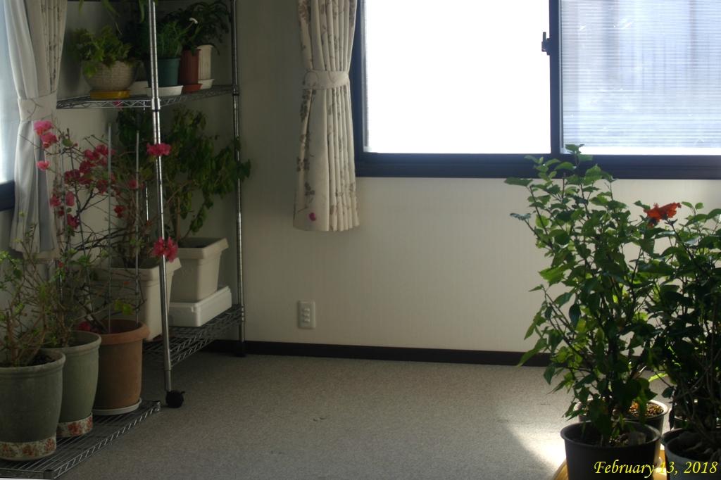 画像3(育苗温室の設置準備)