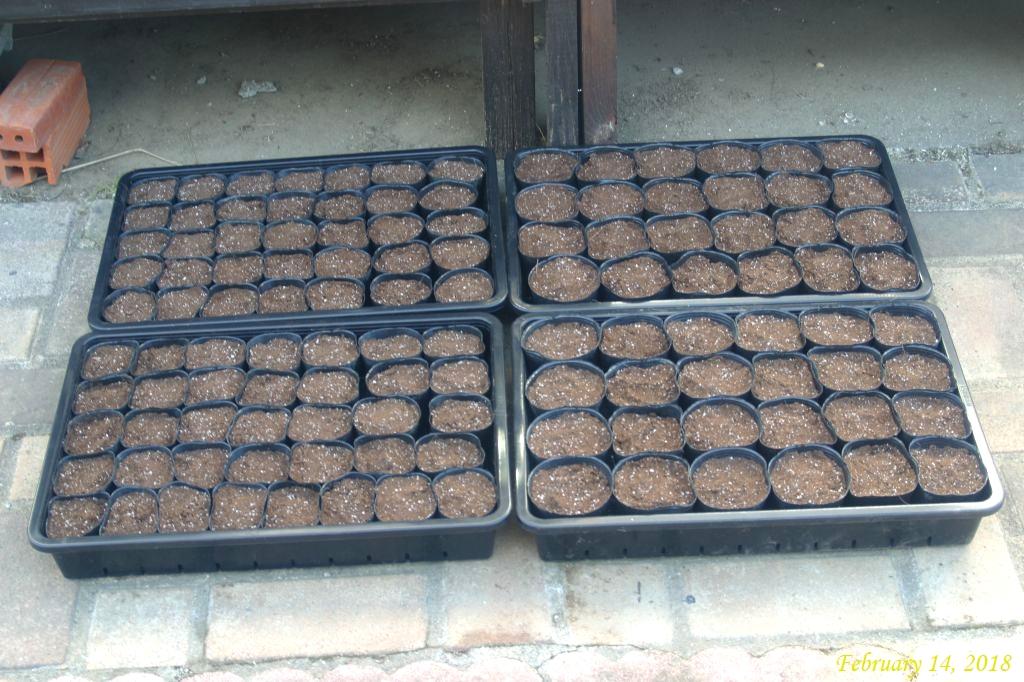 画像2(種まき培養土を入れたポリポット)