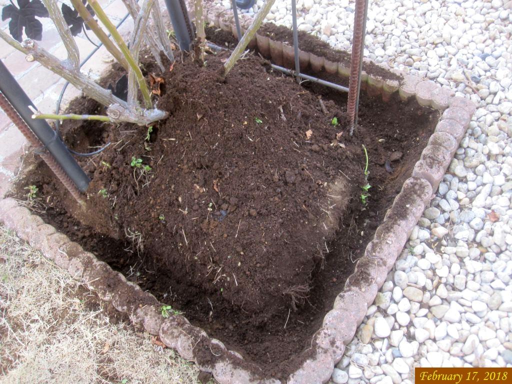 画像3(アーチのバラの寒肥溝掘り)