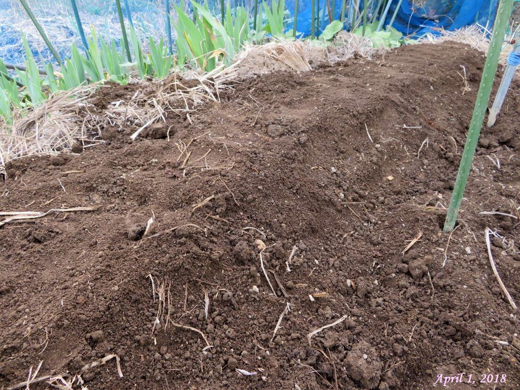 画像15(山芋の植え付け完了)
