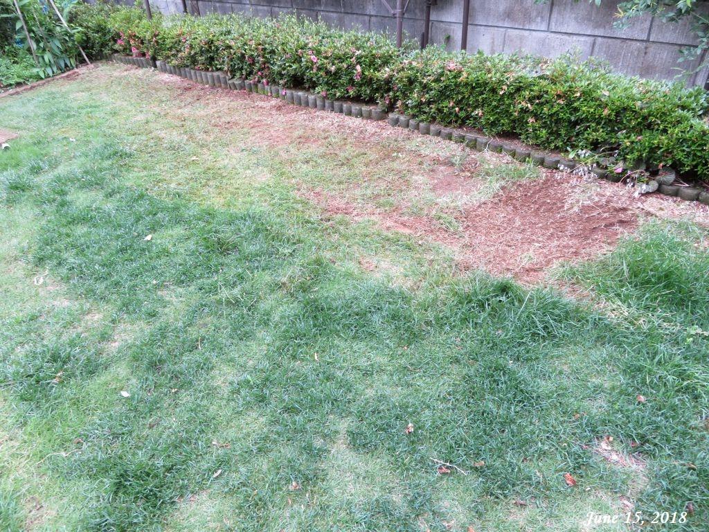画像8(芝生の草取りと下刈り)