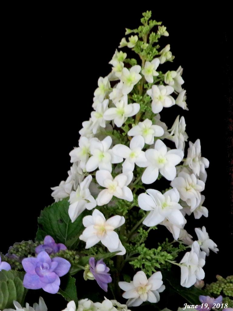 画像3(紫陽花の切り花)