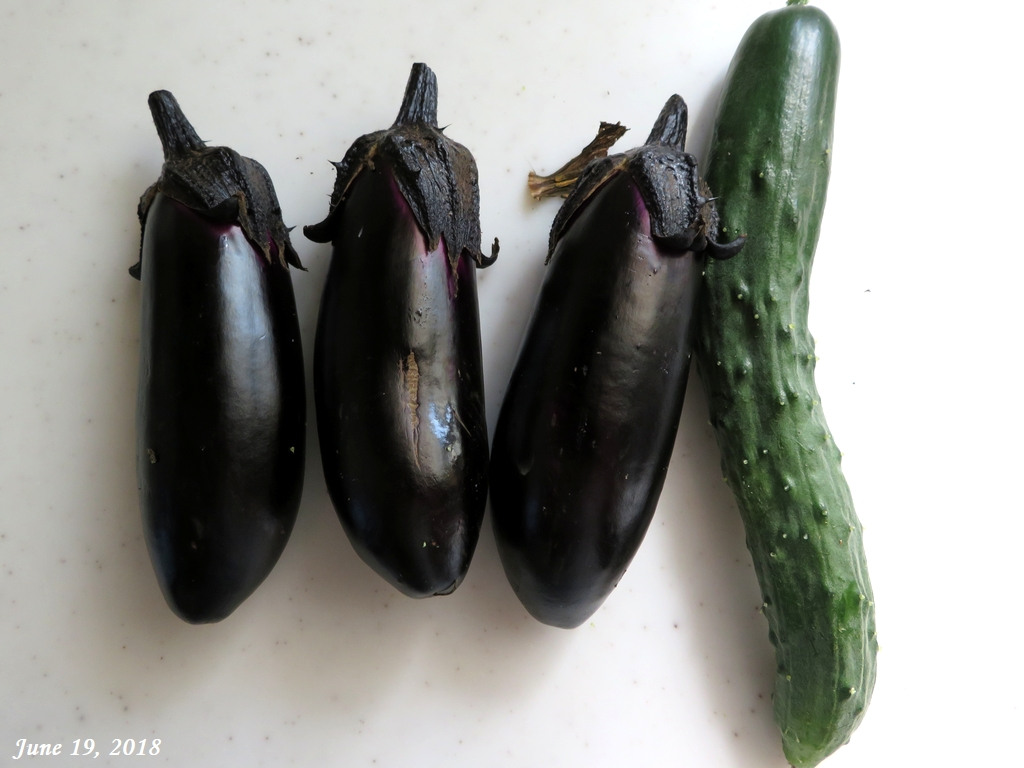 画像5(収穫したキュウリと茄子)