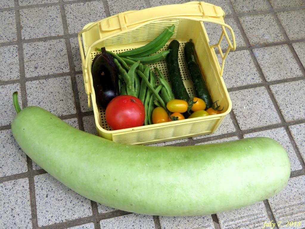 画像9(収穫野菜)