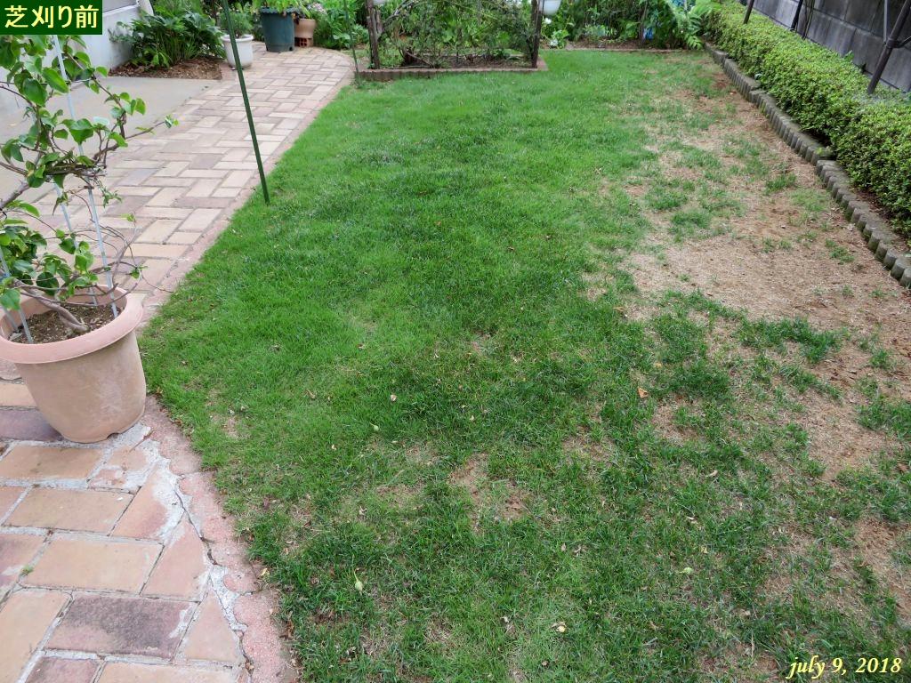 画像12(芝刈り前)