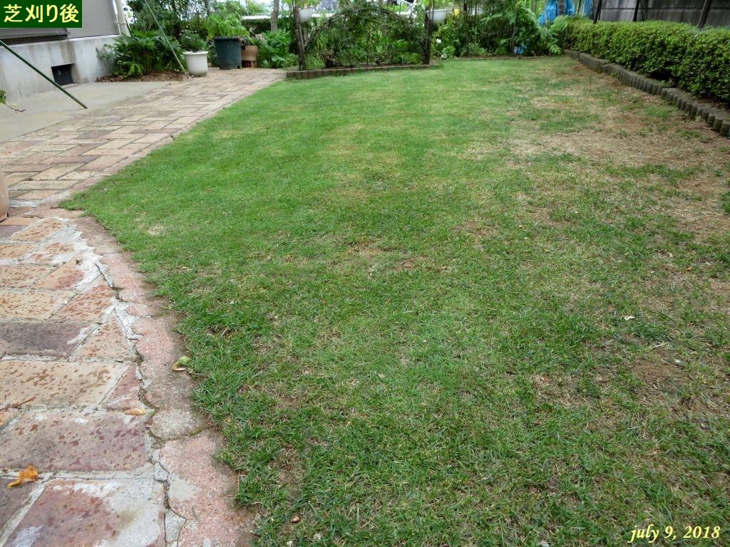 画像14(芝刈り後)