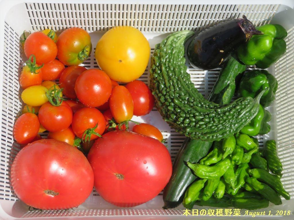 画像8(本日の収穫野菜)