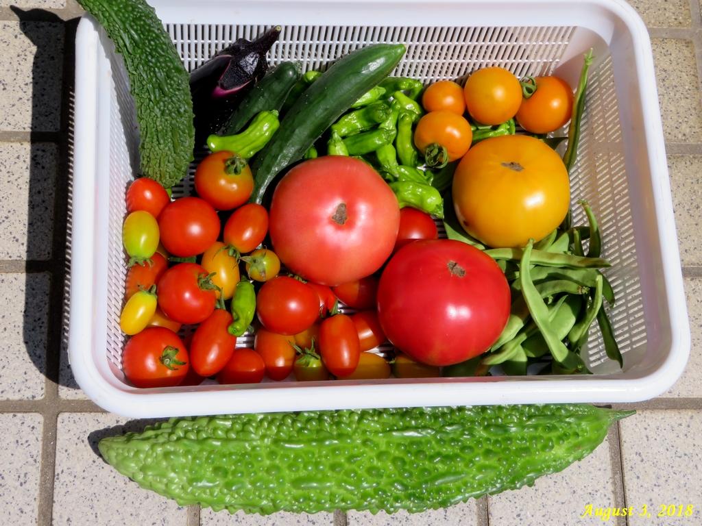 画像12(収穫した野菜)