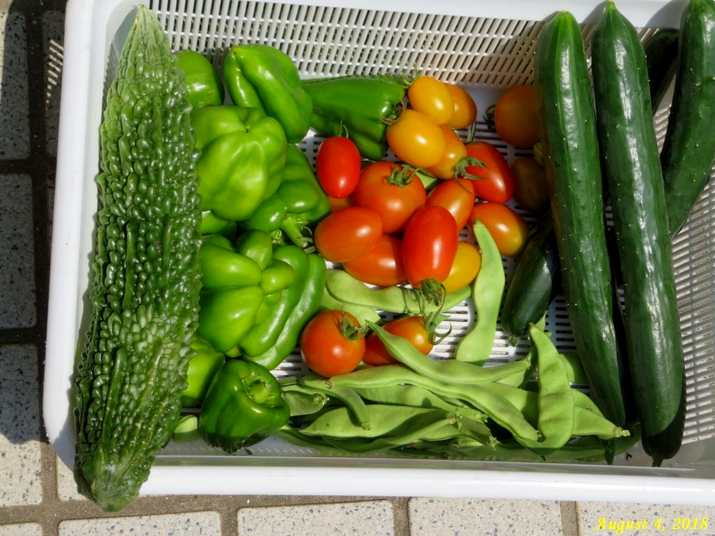 画像5(収穫した野菜)