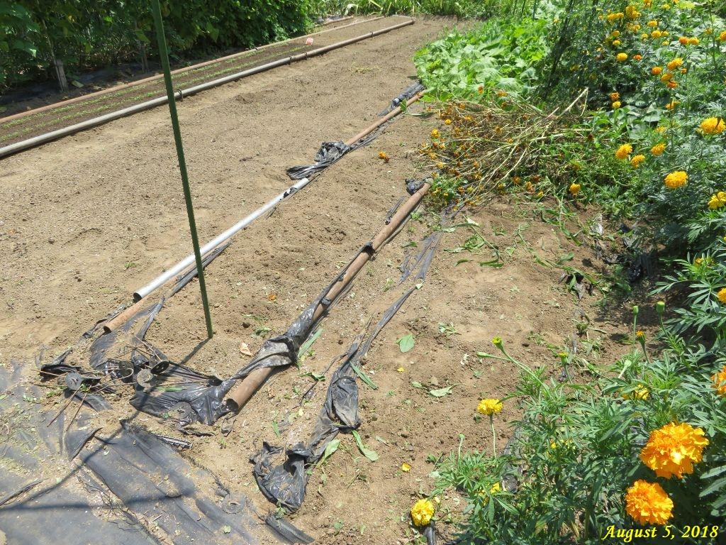 画像10(スベリヒユを取った後の畑)