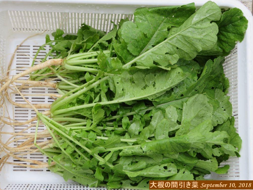 画像5(大根の間引き菜)